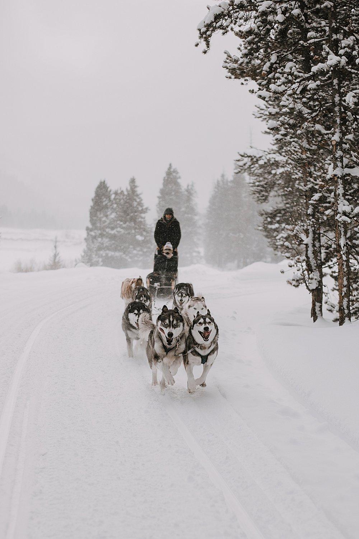 siberian husky in the snow, sled dog, dogsledding, winter, winter elopement, winter wedding, breckenridge colorado photographer, colorado dog sledding, dogsledding elopement, snowmobiling elopement