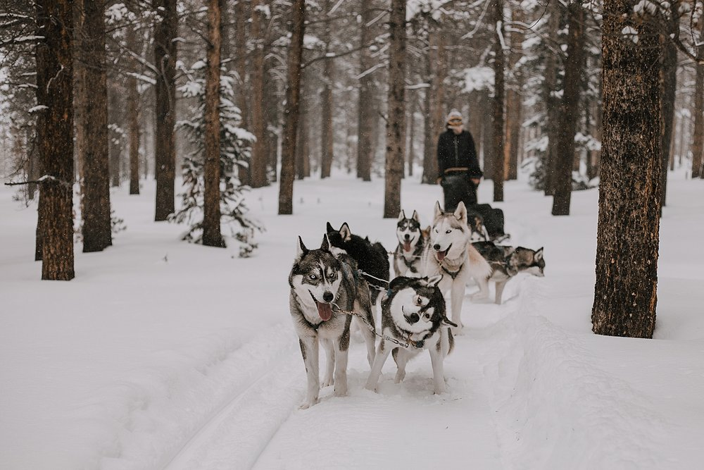 dogsledding engagement, sled dog, dogsledding, winter, winter elopement, winter wedding, breckenridge colorado photographer, colorado dog sledding, dogsledding elopement, snowmobiling elopement