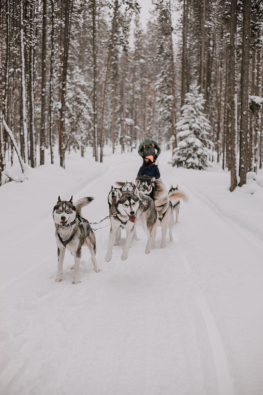 siberian husky jumping, sled dog, dogsledding, winter, winter elopement, winter wedding, breckenridge colorado photographer, colorado dog sledding, alaska  elopement, snowmobiling elopement