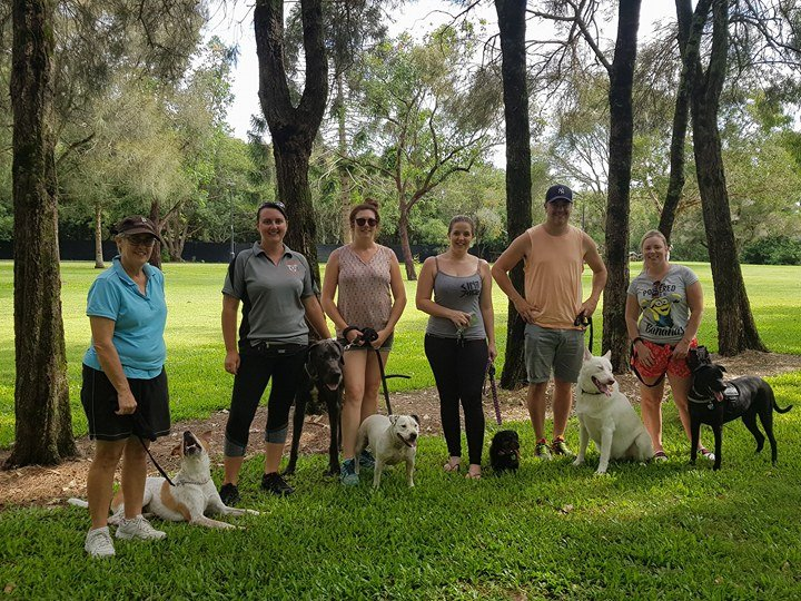 Dog Training Sunshine Coast