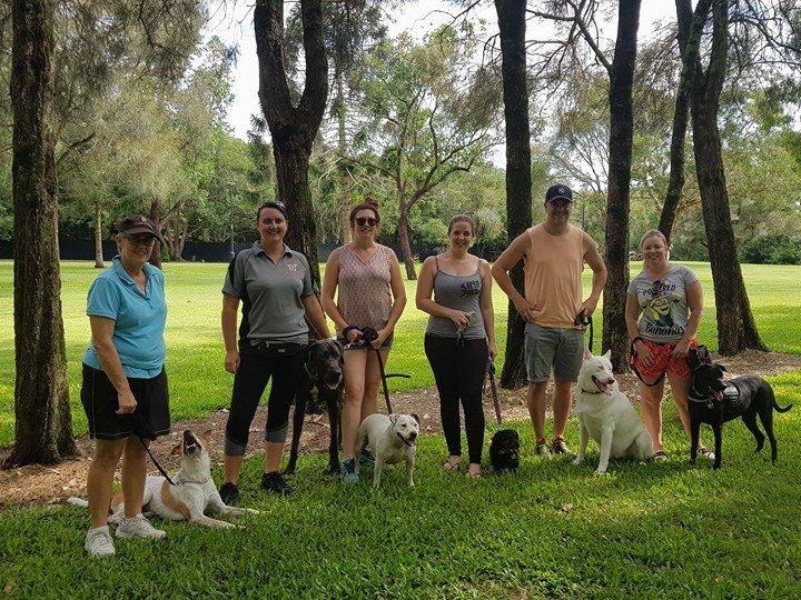 Dog Training Sunshine Coast