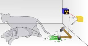 S Cat.jpeg