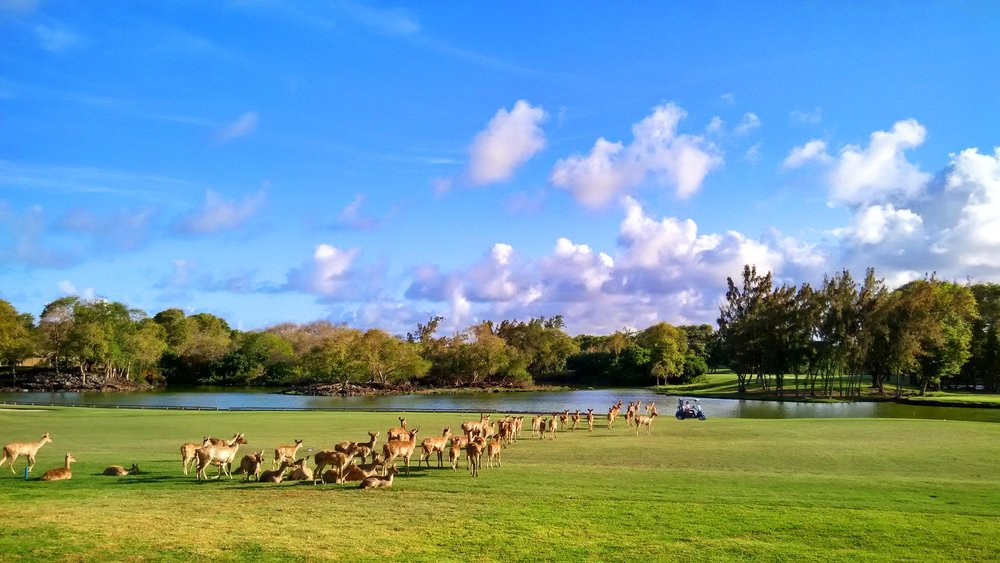 Constance Mauritius   A golf course that allows you to mingle with deer, set on one of the more scenic location of Mauritius, a great business trip or a beautiful holiday rolled into one.
