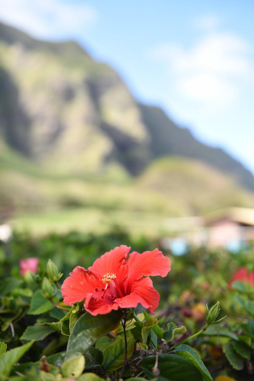 Hawaii2018-778.jpg