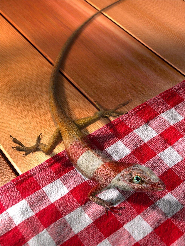 chameleon_blend-w-tablecloth.jpg