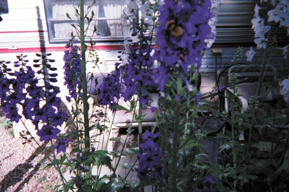 Raelene's garden