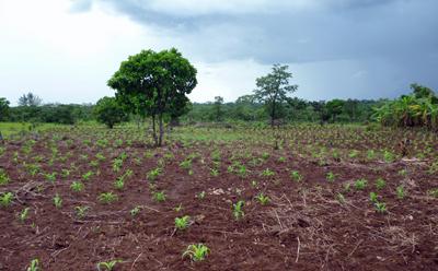 Mkuti Jiendeleze maize farm in the village of Nyanganga in the Uvinza region of Kigoma Province