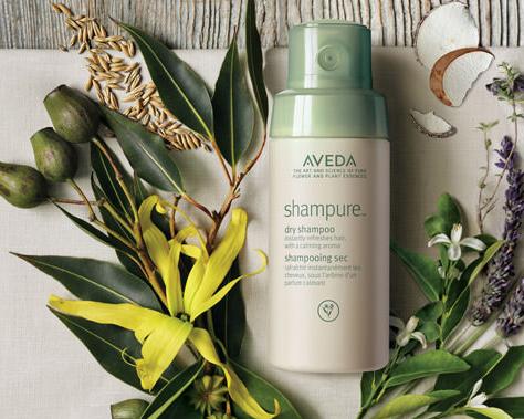 shampure copy.jpg