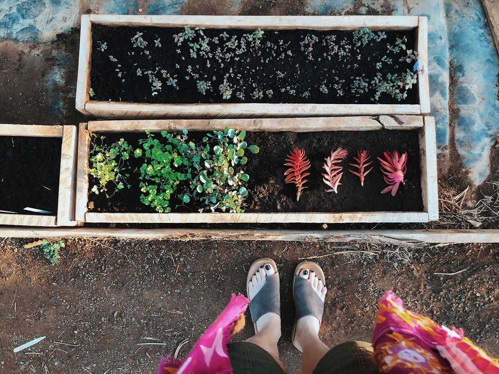 garden olepangi farm