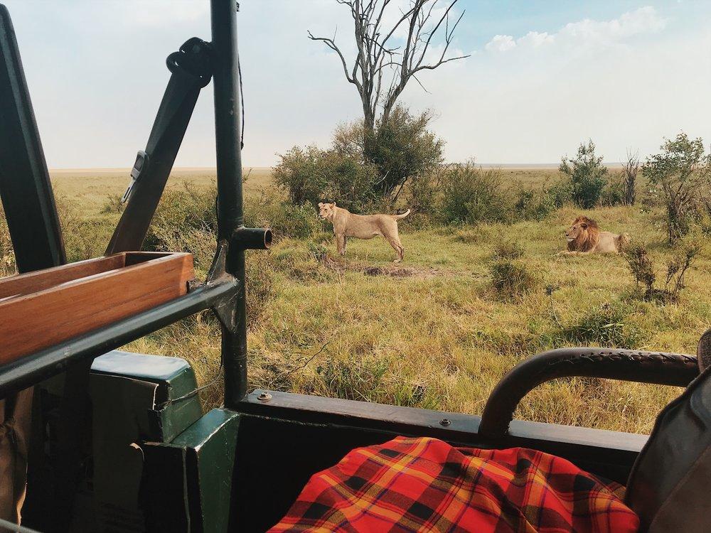 sentinel mara masai mara safari
