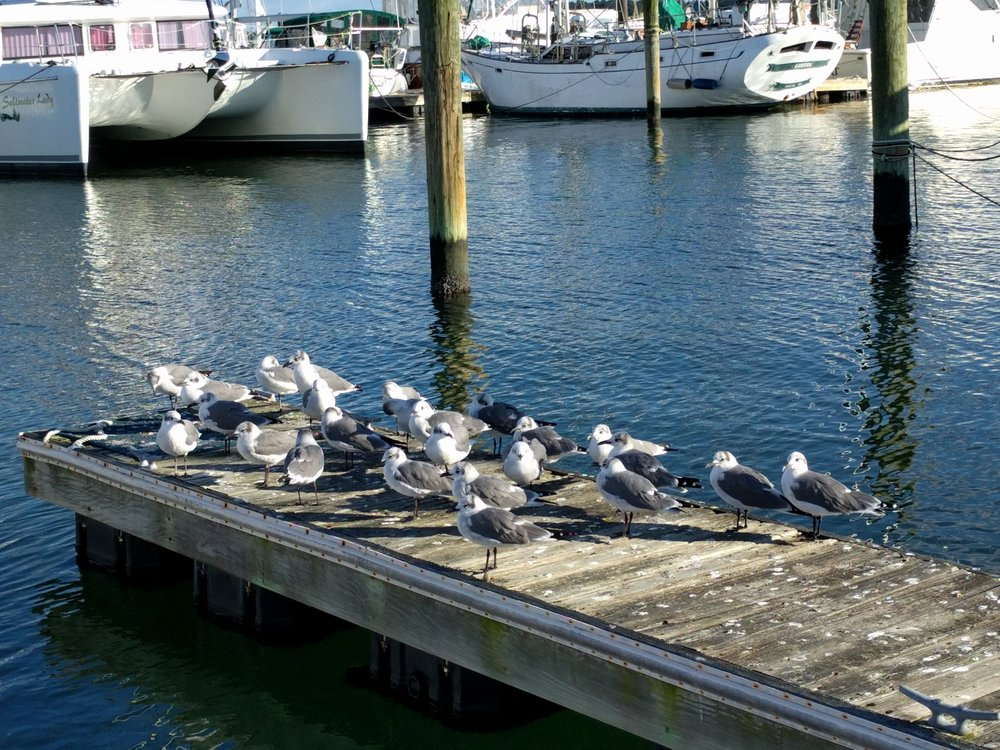 Tons of seagulls around here.