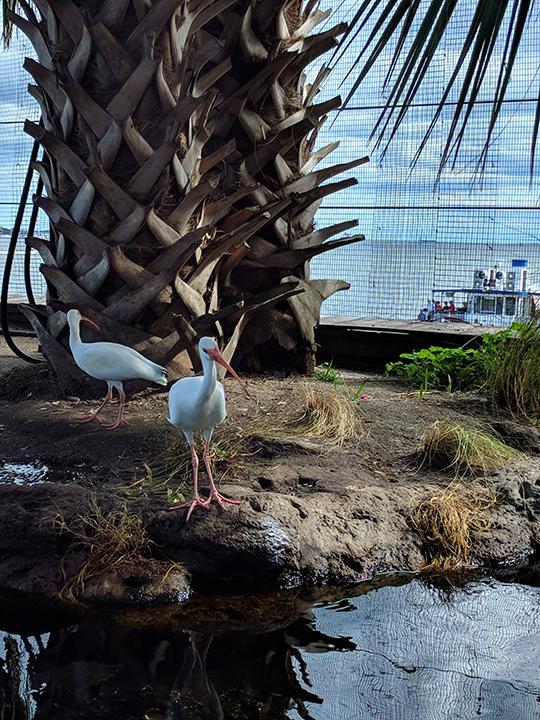 Aquarium: Local birds in rehab.