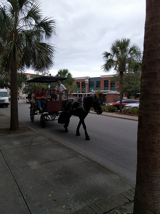 Horse & Buggy Tours