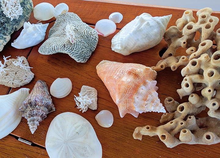 Our beach treasures.