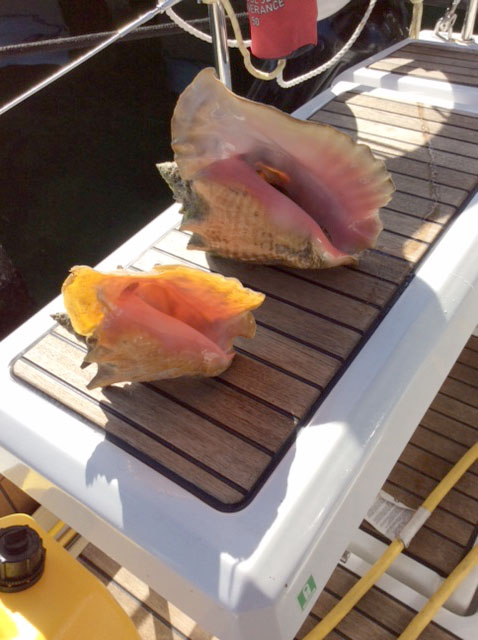 We will enjoy fresh conch for dinner.