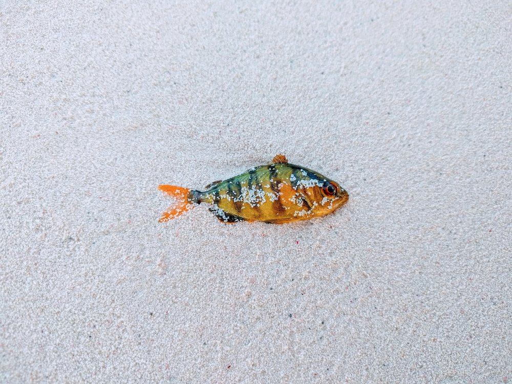 This little fish didn't make it through the storms.