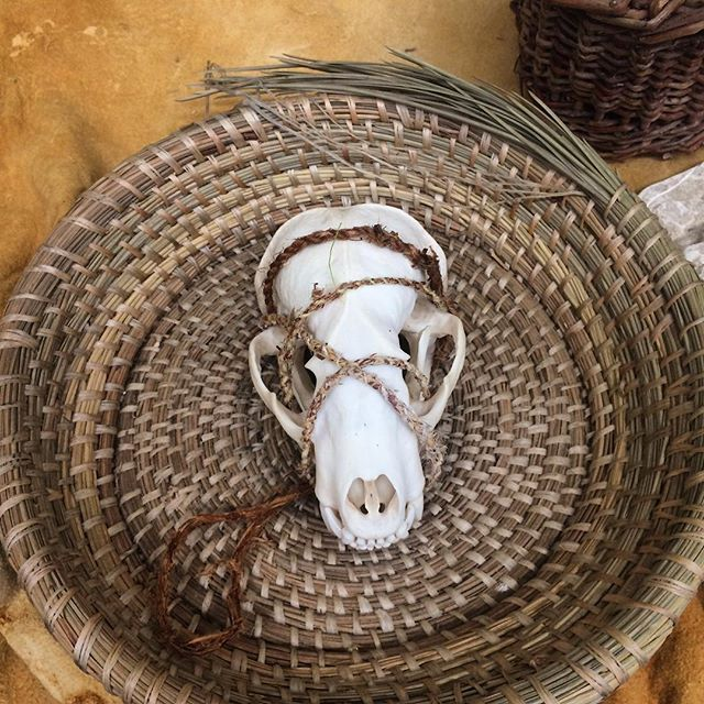 It's been a super inspiring 24 hours meeting staff and students at Colorado College @innovate_cc to talk about our work and dream into possibilities of collaboration! Thank you @innovate_cc @dezstone and @themcclintock and all the students we met for the community, solidarity, and hospitality. In the photo: ponderosa pine needle basket, badger skull, dogbane cordage, buckskin. On Ute and Cheyenne territories.