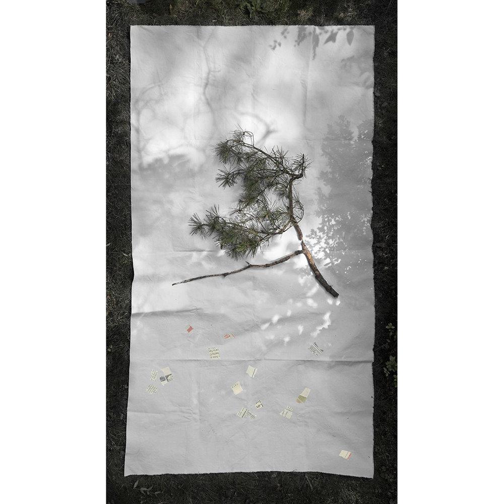 pine_4.jpg