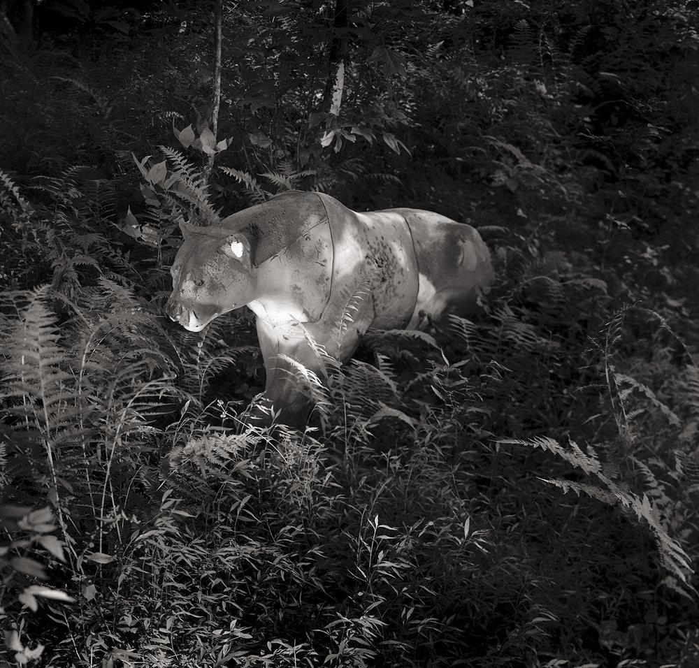 Cougar, 2010