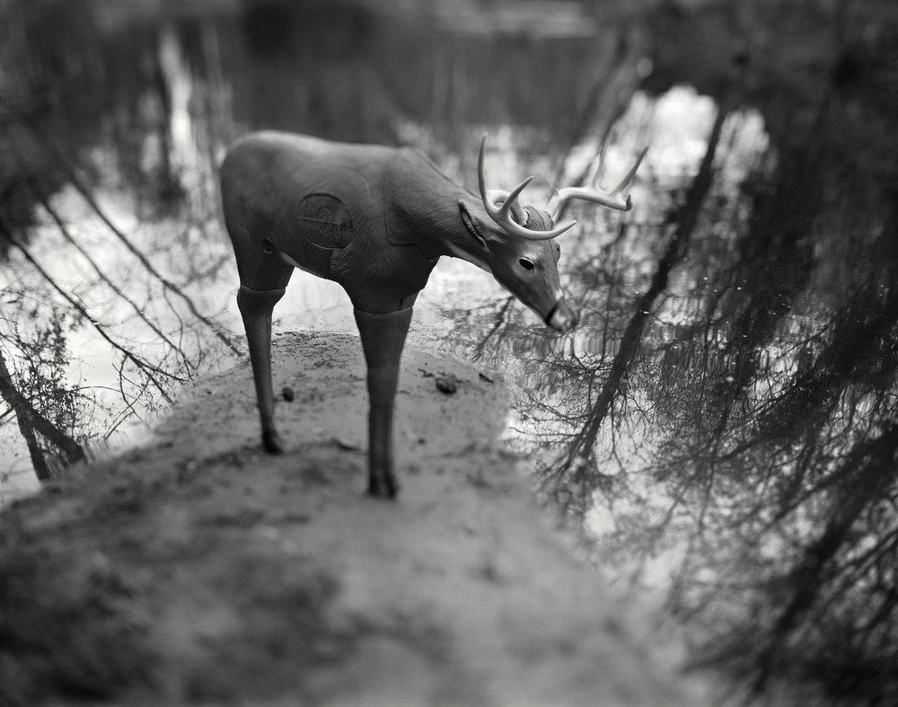 Deer on Point