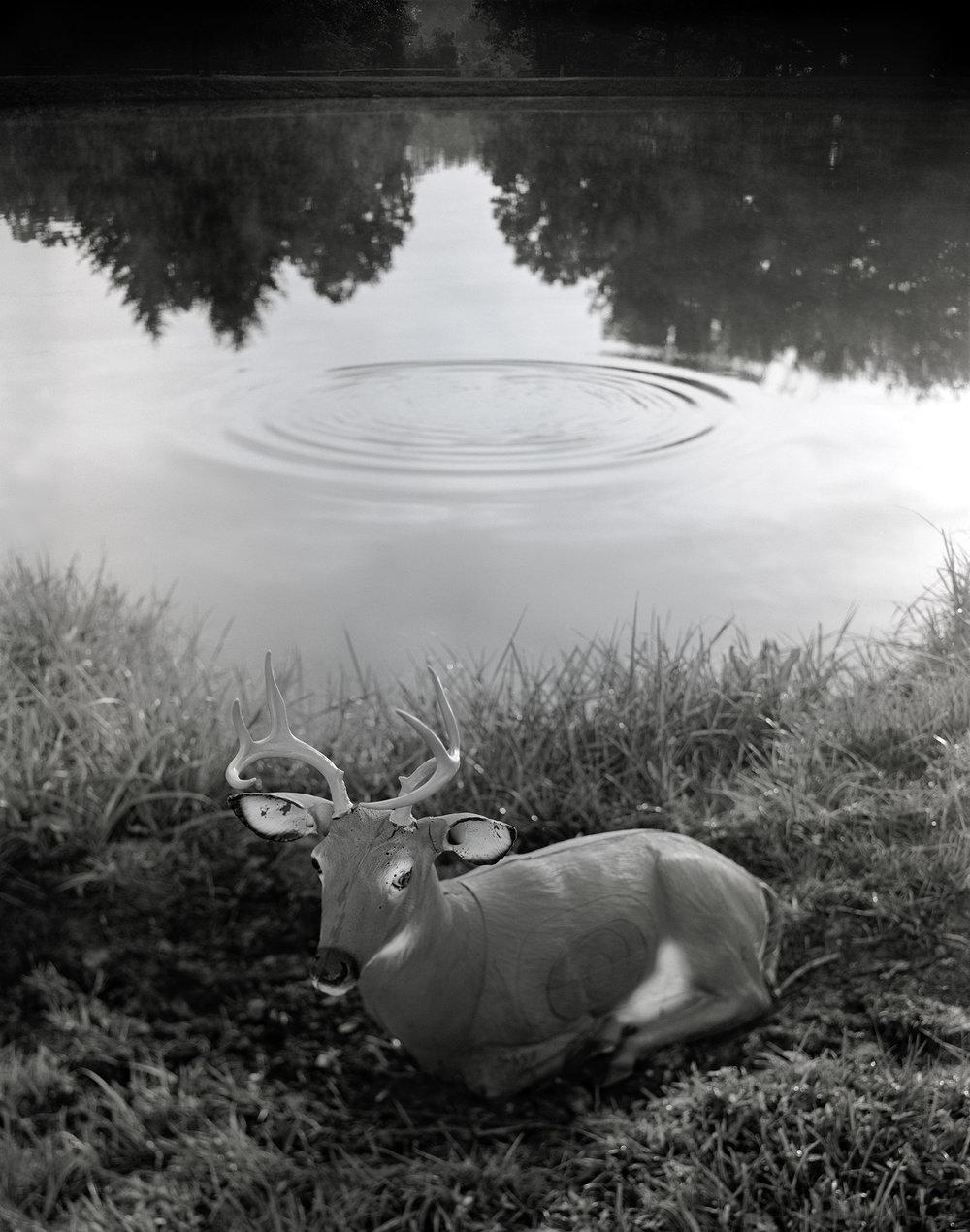 Water Circle Deer