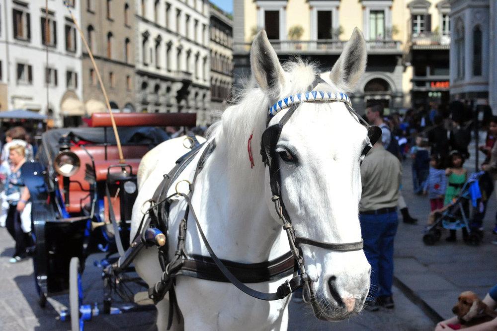 Horse in Firenze