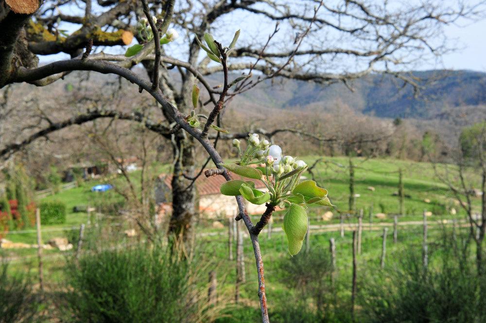 Podere Ciona, Tuscany