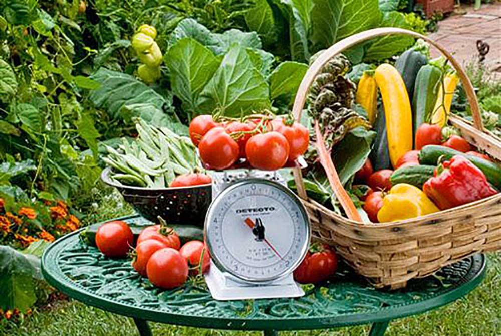 drp-edible-harvest-scale-1000px.jpg