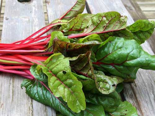 Seedling22-swiss-chard.jpg