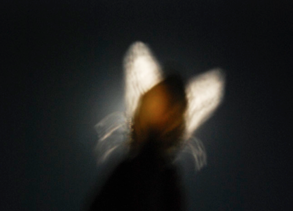 Fly by Night, 2012
