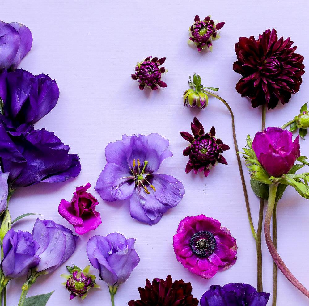 ROYGBIV-Violet-Option-2.jpg