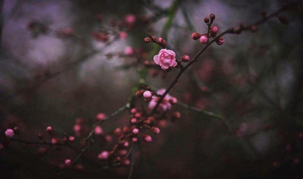 beau pink bud.jpg