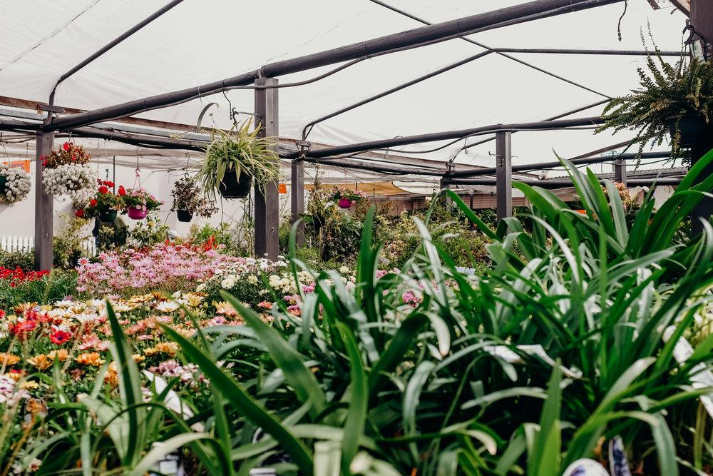 Toowoomba Nursery Landscape Plants