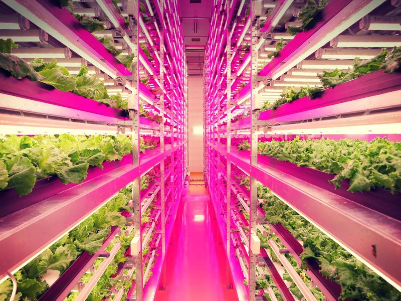 World's Largest Indoor Farm is 100 Times More Productive