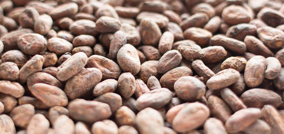 kilombero_cacao.jpg