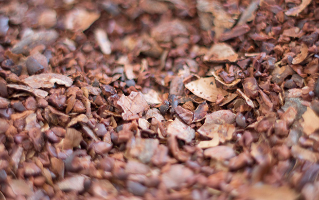 Winnowing Cocoa Beans