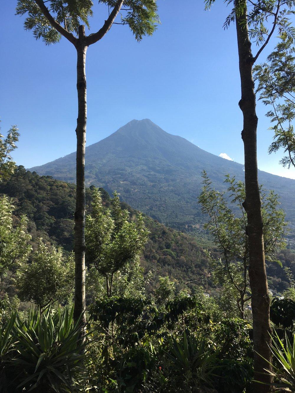Volcán de Agua from Finca Santa Clara.