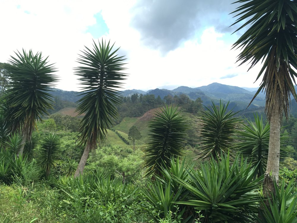 Anti-erosion palms and expansive views.