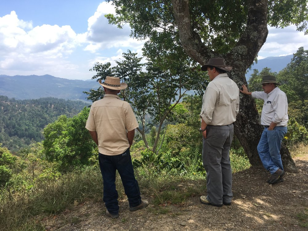 Pice, Ricardo and Rafa watching us look at a Panamanian Geisha plant.