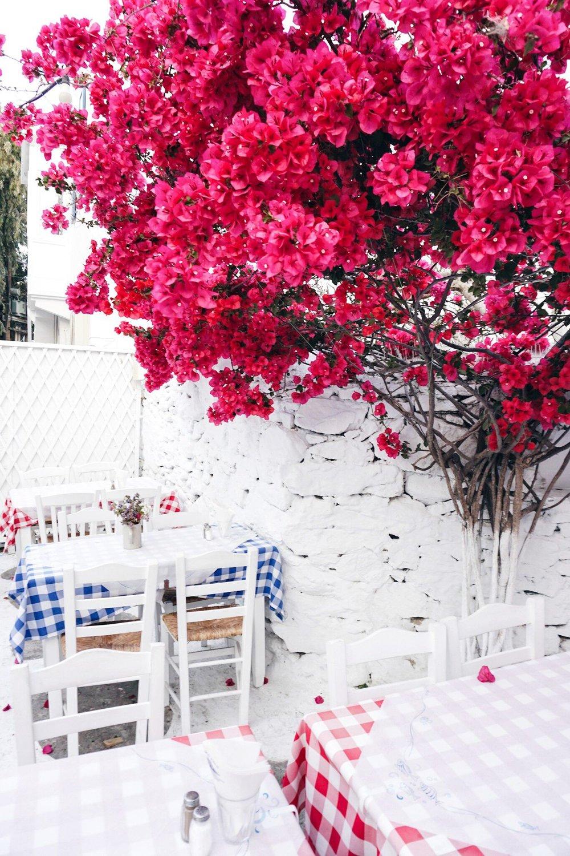 Flower Spam in Mykonos town