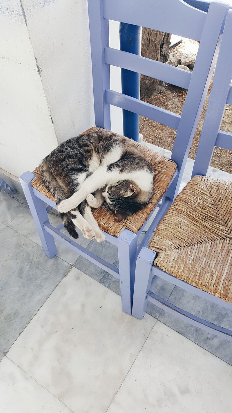 The Cats of Greece