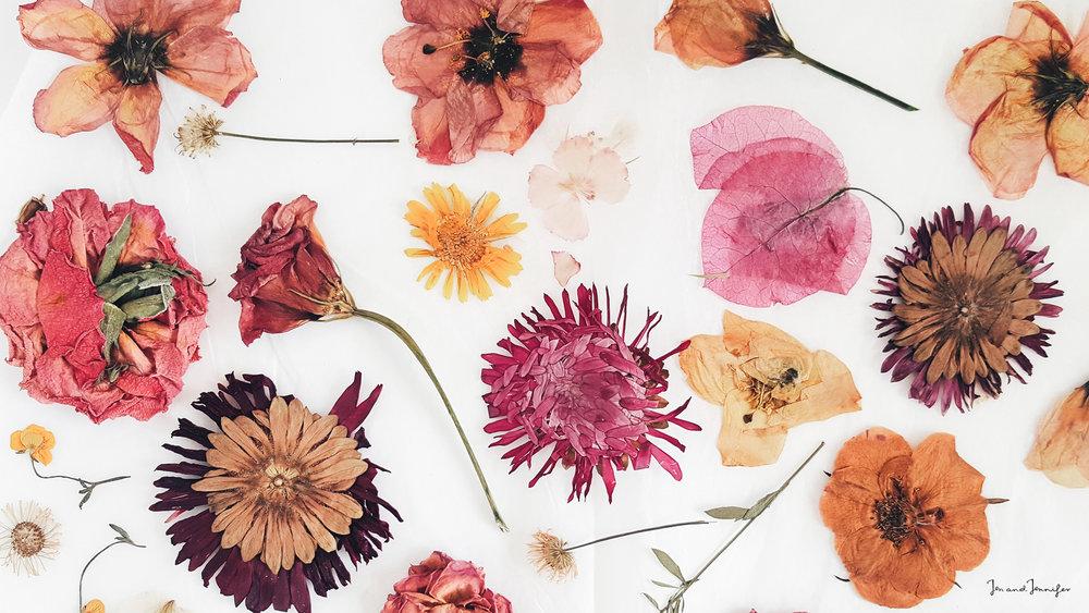pressedflowers_jenandjennifer_desktop_wallpaper.jpg