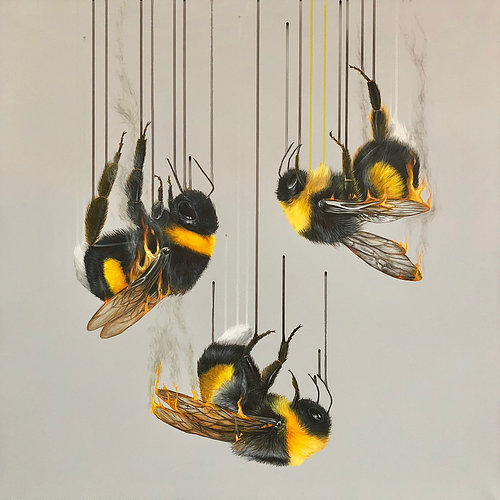 "Louise McNaught  is an international fine artist based in London who has dedicated her practice to that of animals and the natural world. ""When focusing on endangered species the imagery often takes on a duality of not only what is happening to the animal itself, but also reflects how we feel psychologically about the effect the human race is having on these species.""   Above: ""Ashes, Ashes WE All Fall Down""  is a Giclee print on Somerset Velvet 330 gsm Paper, Edition of 25. 60x60cm This piece shows the plight of the White-Tailed Bumble Bee, which keep creeping into the endangered status because of pesticides. They are tumbling to earth with their wings on fire to echo how mankind is treating them and create a shocking image to draw attention to this before its too late..."