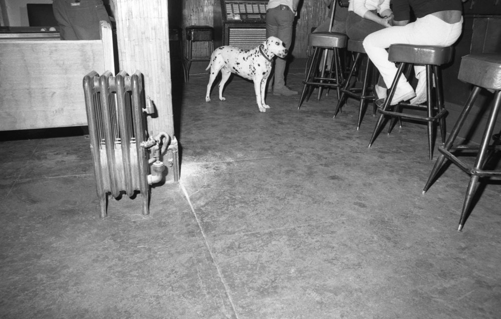 A dog at Al's Bar, Los Angeles, about 1981. (1/3)