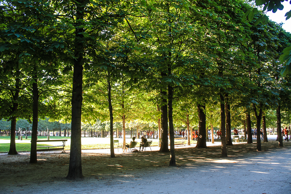Sunlight through the trees at Jardin des Tuileries