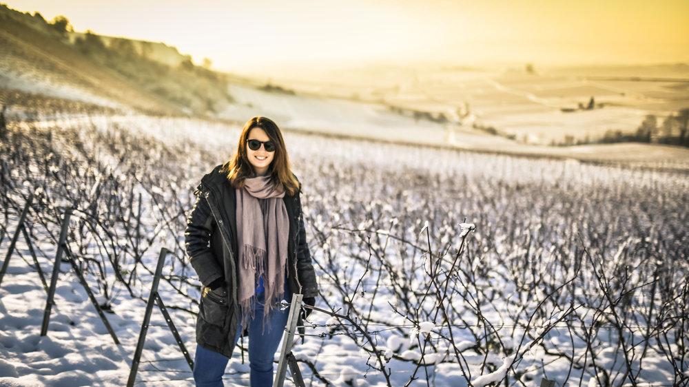Ein Lob der Hochkultur - so niedrig sind die Weingärten der Champagne!
