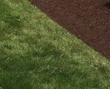 Your mulch job will always look better with a nice clean edge on the mulch beds.