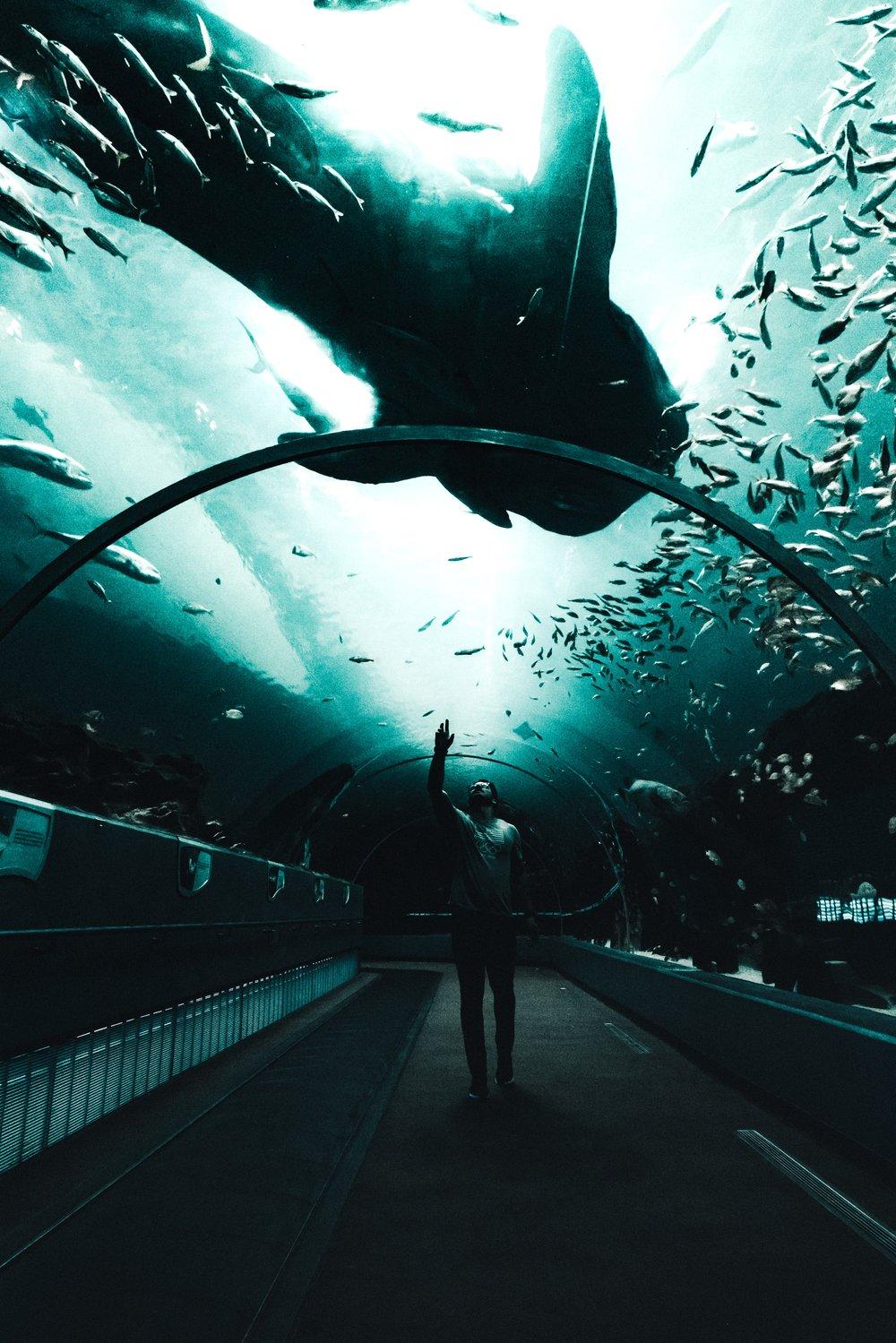 Aquarium Lauren-07363.jpg