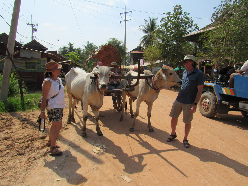 Ox cart with friendly ox, in a village south of Siam Reap, Cambodia, July 2016