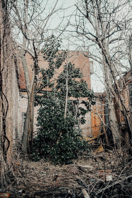 Mill 133 - Magnolia.jpg
